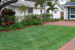 landscaping-pinellas-county
